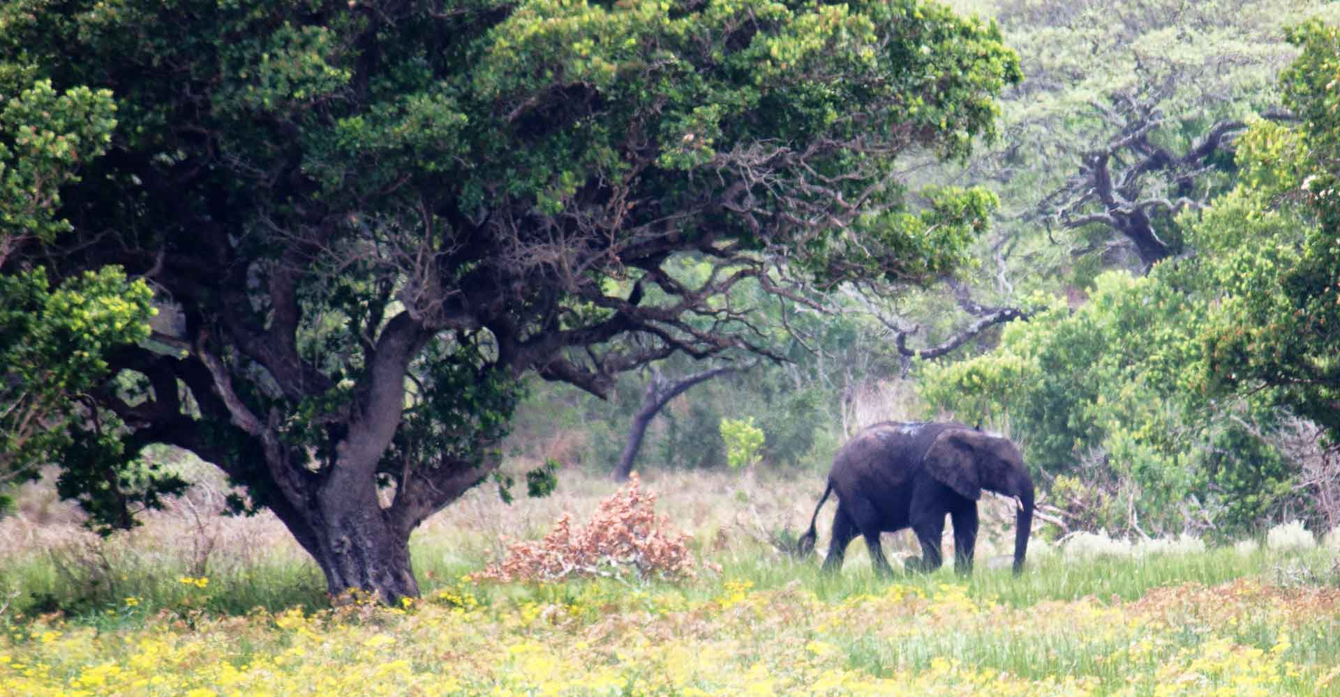 Elephant picture taken during an expedition in Mozambique with Mabeco tours