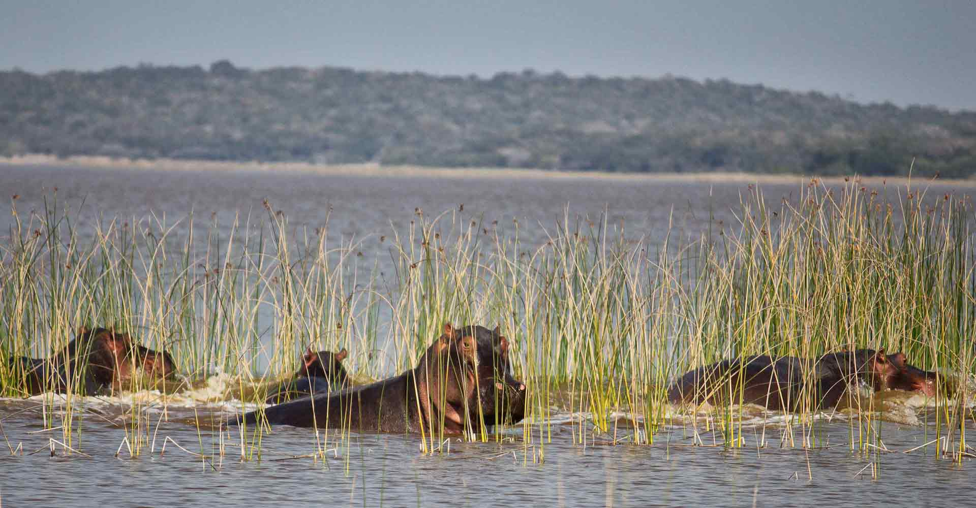 Hippo at lagoon on 3 day safari to Maputo special reserve with Mabeco tours
