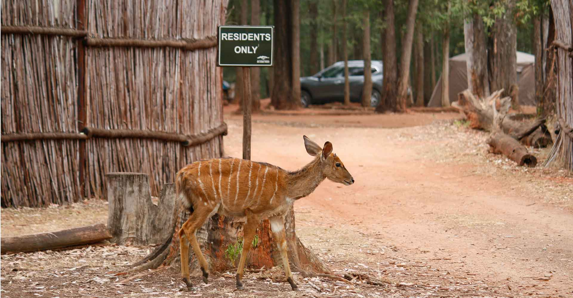 Photo of a nyala at Mlilwane with Mabeco tours during a safari from Maputo