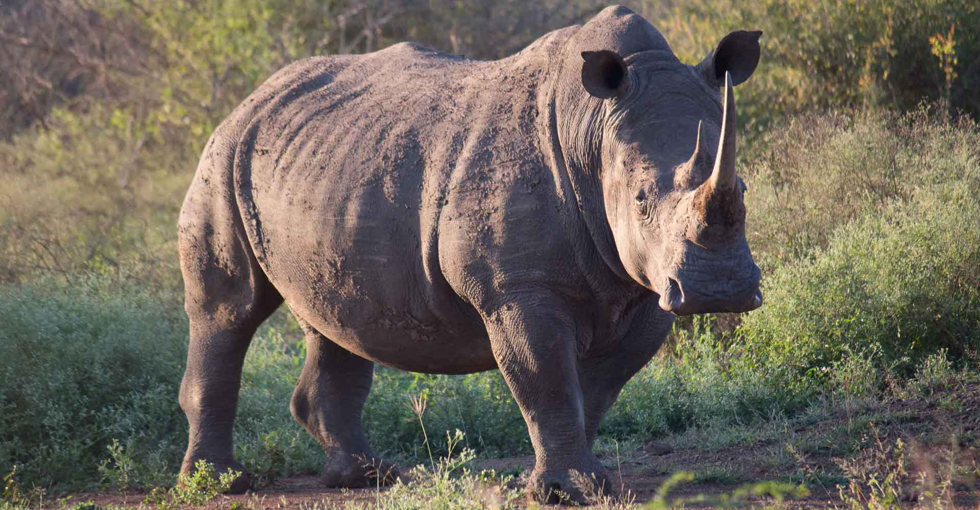 Photo taken in Swaziland of a rhino during a tour to Swaziland from Maputo by Mabeco tours