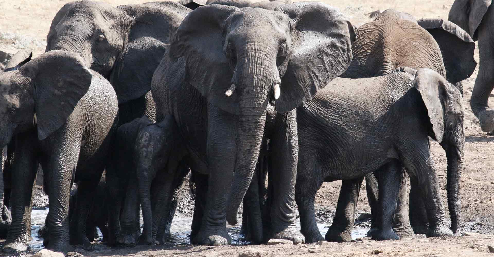 Elephant herd sighting in Sabie game park by Mabeco tours