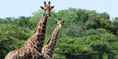 Safari to kruger national park from Maputo