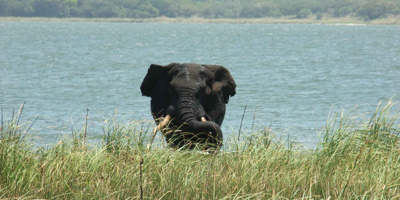 Day trip to maputo special reserve with mabeco tours